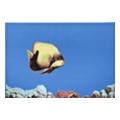 Керамическая плиткаATEM Monocolor Fish 1 (07734)