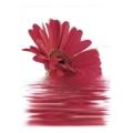 Керамическая плиткаNovogres Decor Moments 27x60 розовый