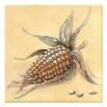 Rako CLASSIC Corn bezova inzerto 15x15 (WIT1B261)