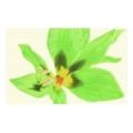 Paradyz Concert inserto drucowane kwiat 25x40 Verde